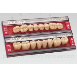 Denti SR-ORTHOTYP post inf forma N4 col 2C